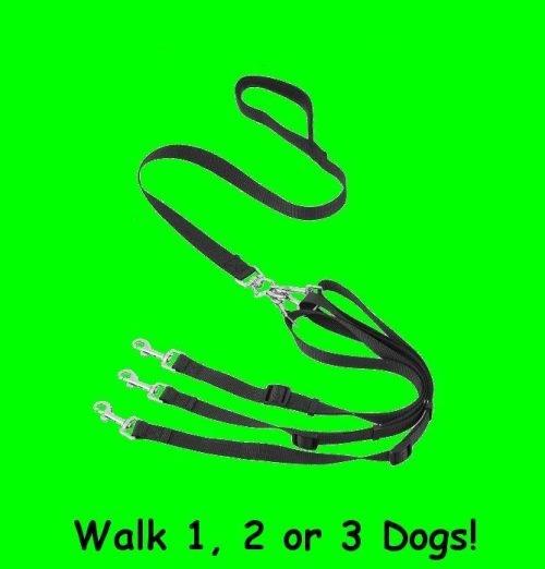 Dog Leashes Ocala
