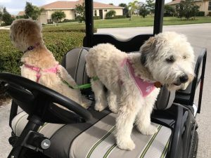 Dog Leashes Myrtle Beach