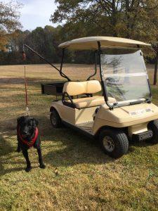 Charleston Golf Cart Rentals Mount Pleasant